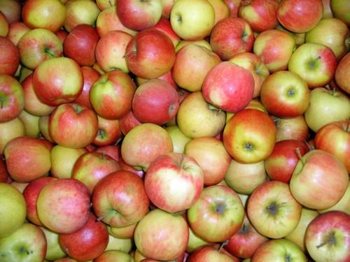 Яблоки, мои любимые яблоки по 59 евроцентов.